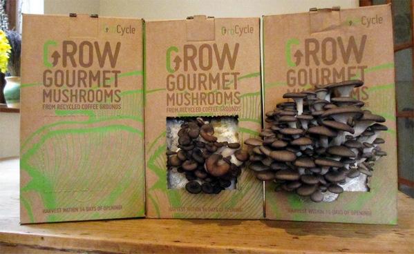 coffee grounds mushroom