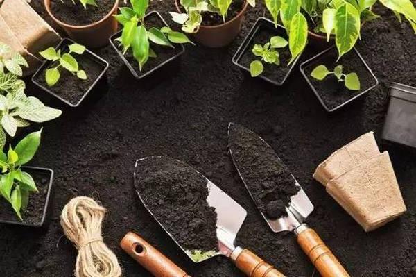 Fertilize Your Garden