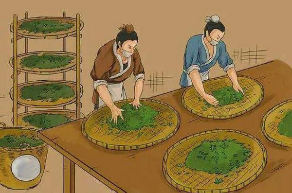 An overview of the process of making tea