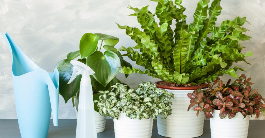 Make your home greener with more green plants-4
