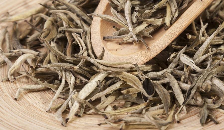 Is white tea better than green tea-2