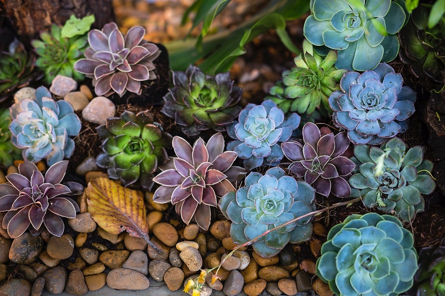 Why your succulents are dying-2