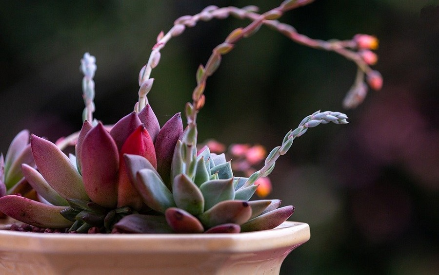 5 indoor plants that absorb harmful radiation-2