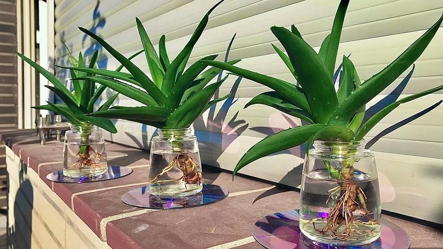 5 indoor plants that absorb harmful radiation-4